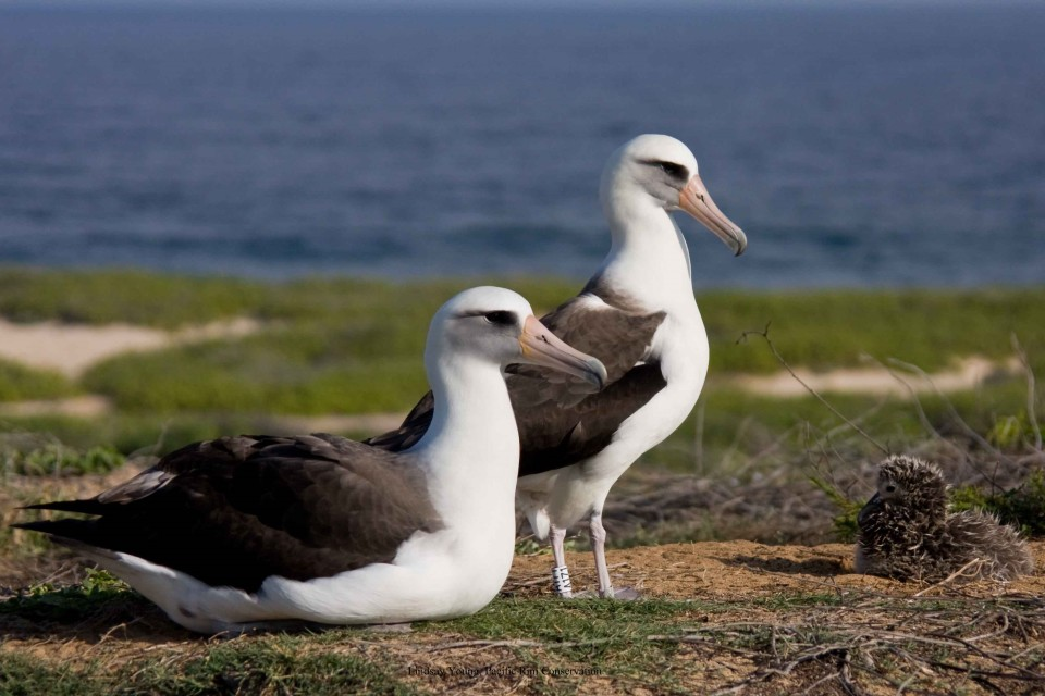 Denby Fawcett: After Albatross Slaughter, Can We Protect Our Wildlife?