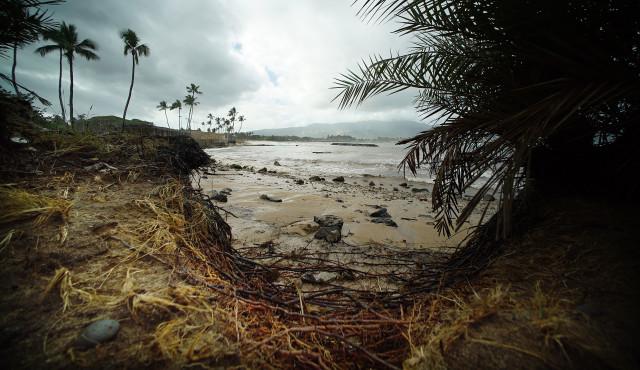 Haleiwa Beach Park waves beach erosion roots.