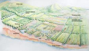 Report: Maui's Farming Future