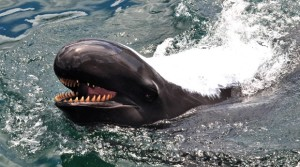 UH Sold Three Marine Mammals To Sea Life Park Without A Permit