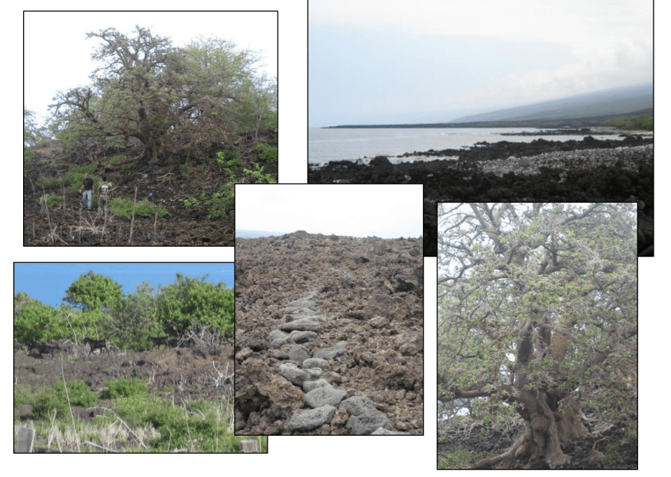 Kona Land Resolution Gets Last-Minute Hearing