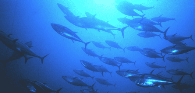 Federal law protecting fisheries