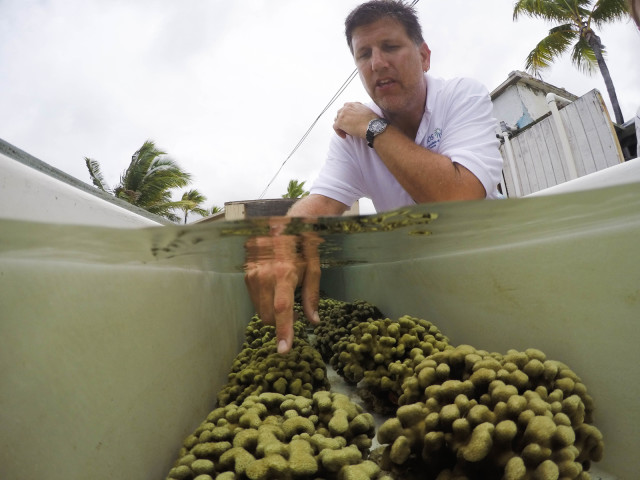eric-hochberg-hawaii-institute-marine-biology-coral-research