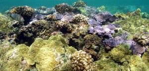 Drop The Oxybenzone, Or Stop Swimming In Hawaiian Waters