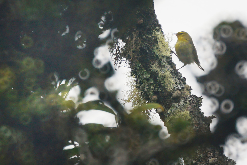 The Projector: Stepping Back In Time Amid Native Birds, Plants