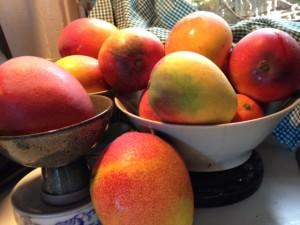 Denby Fawcett: Our Backyard Mango Trees Are Vanishing