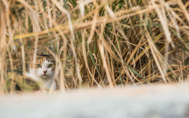 Feral cat hiding in the brush next to the Hawaii Kai park-and-ride.