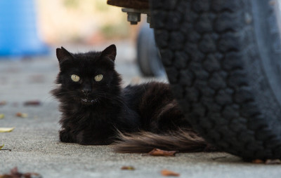 There's One Obvious Solution To Hawaii's Feral Cat Problem