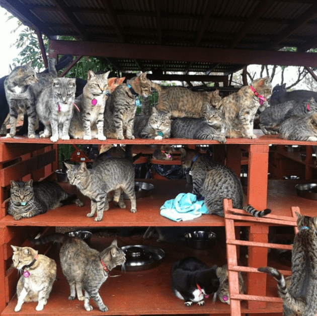 Hawaii's Cat Island