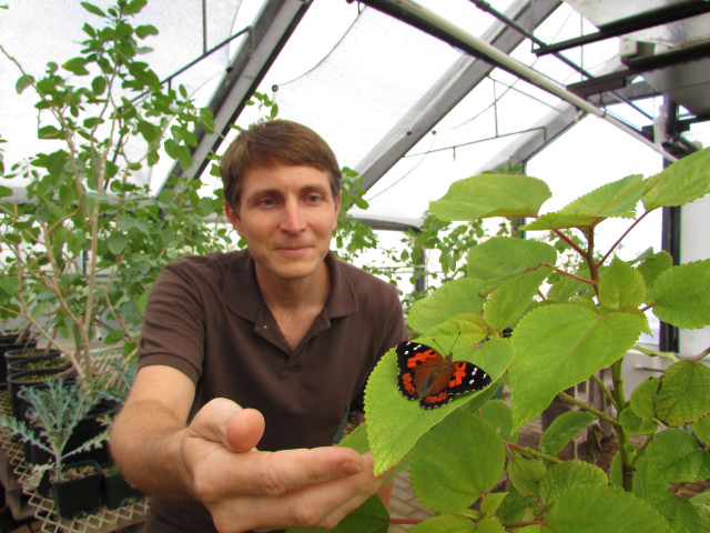 William Haines and a Kamehameha butterfly on a mamaki plant.