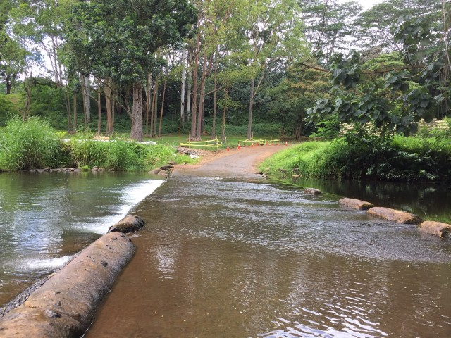 Access to the Lihue-Koloa Forest Reserve is currently through a submerged roadbed that forces you to drive through a few inches of water at the end of Kuamoo Road