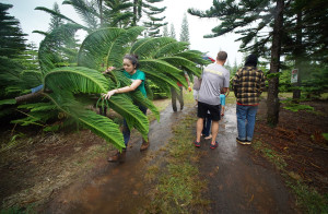 The Projector: Rain Can't Stop A Search For The Perfect Tree