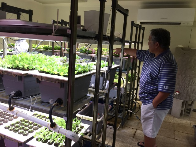 Kerry Kakazu, owner of MetroGrow Hawaii, said he uses mists, LED lighting and controlled temperatures to grow his crops indoors. MetroGrow Hawaii is an urban, vertical farm, meaning crops are planted densely and stacked on trays, taking up a small area of space, rather than being spread across acres of land outdoors.