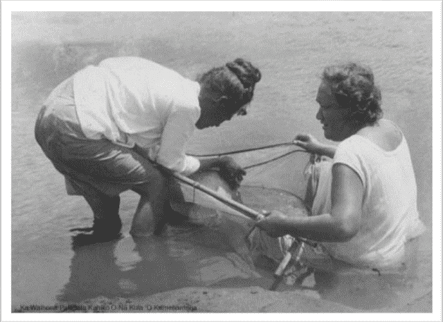 Women catching hinana at mouth of Waimea River, circa 1910.