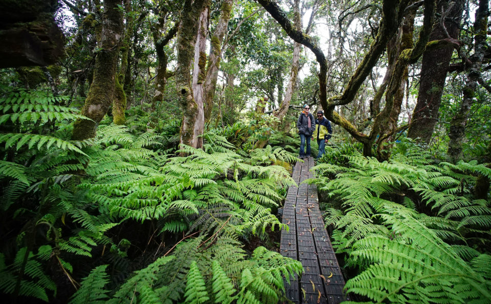 A Better Way To Meet Hawaii's Needs: Invest In Nature
