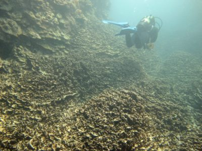 Bret Yager: Scientists Race To Help Hawaii Corals Survive