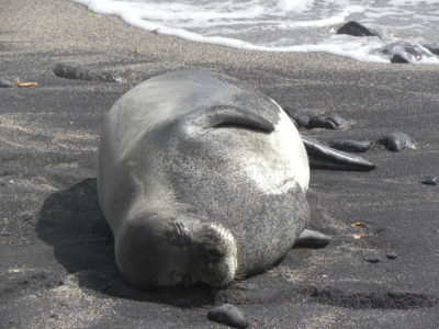 Kauai Man Gets 4 Years In Prison For Harassing Monk Seal