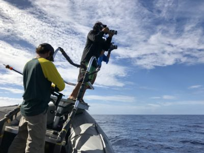 In Search of Hawaii's Mysterious False Killer Whales