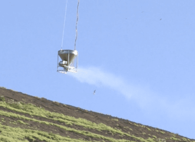 Ridding Lehua Island Of Rats Is A Potentially Dangerous Challenge