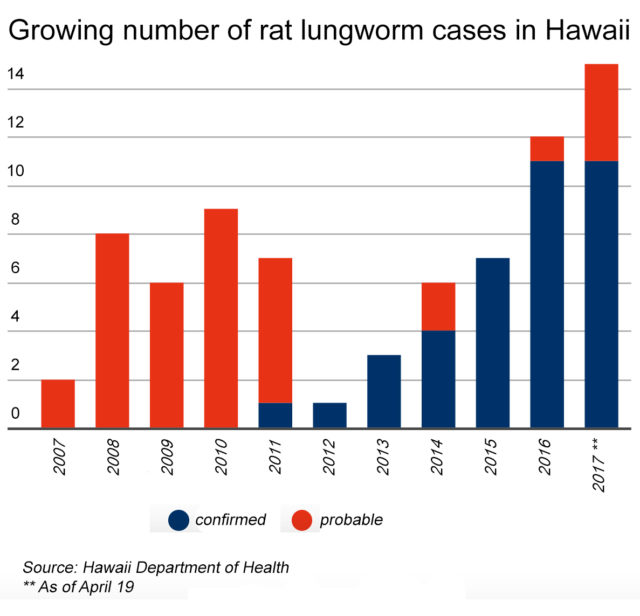 rat lungworm graphic