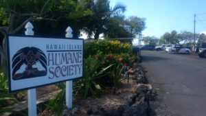 Bret Yager: This Big Island Shelter Is Killing Thousands Of Animals A Year