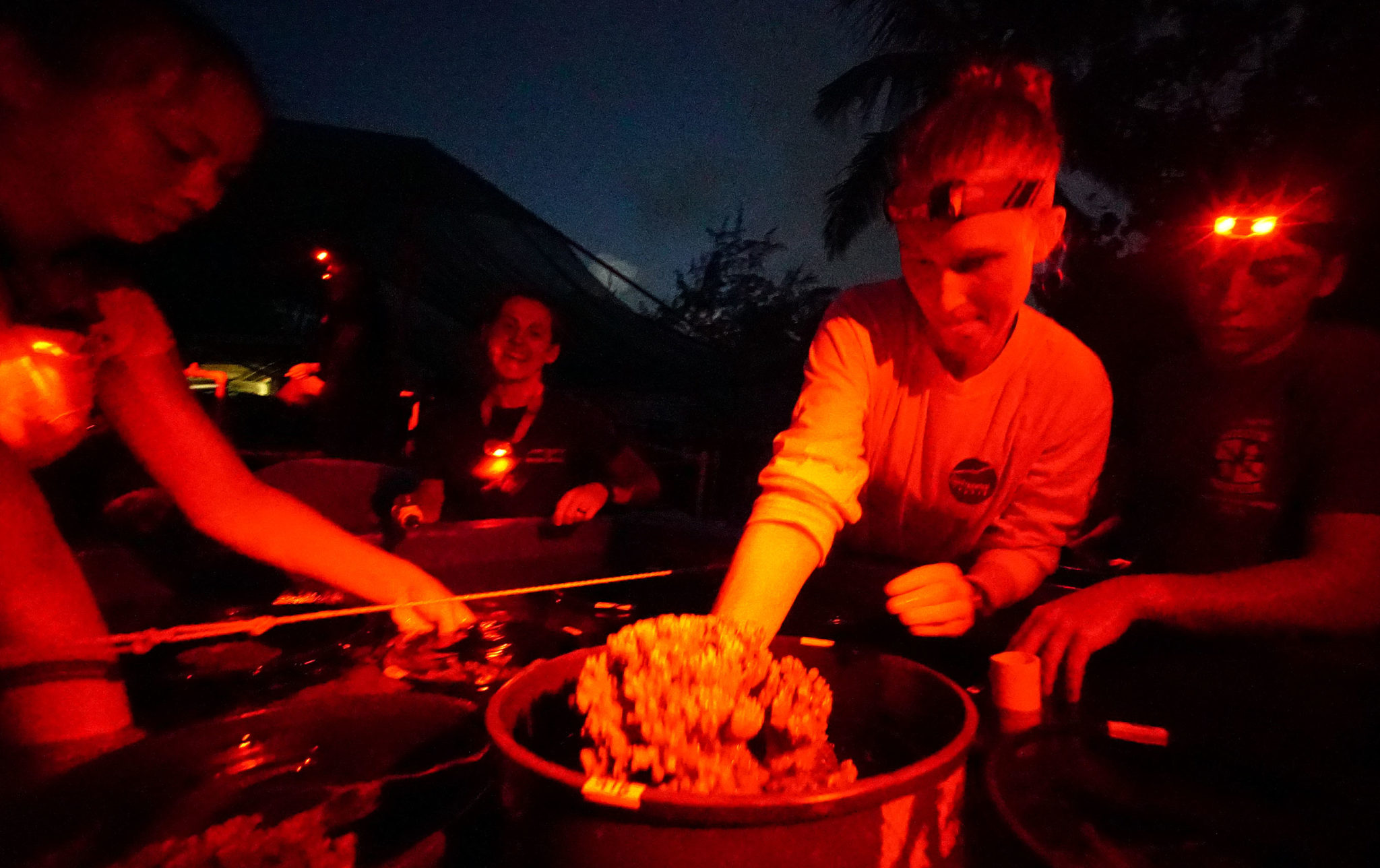 <p>Volunteers at the Hawaii Institute of Marine Biology wear red head lamps as they prepare for the coral to spawn. The white light affects the mitochondria in coral, making them think it is daytime.</p>