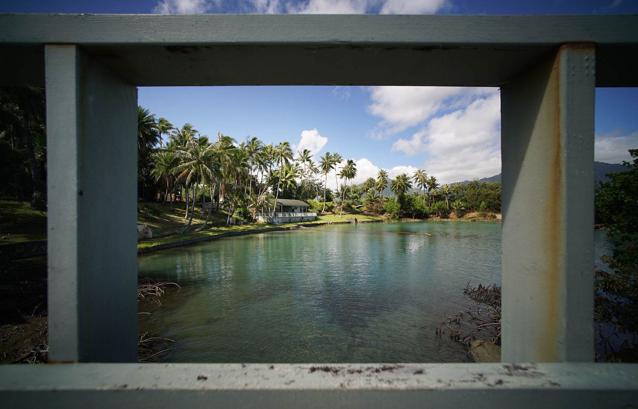 <p>Scientists at the Hawaii Institute of Marine Biology, which is on Coconut Island a short boat ride off of Oahu, have incredible access to the corals they are studying.</p>