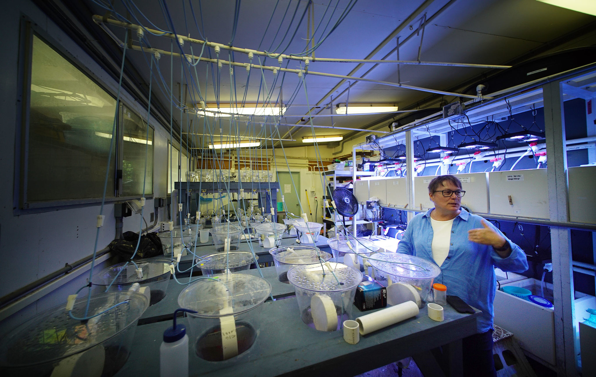 <p>Ruth Gates, who heads the Hawaii Institute of Marine Biology, is conducting &#8220;assisted evolution&#8221; experiments with corals.</p>