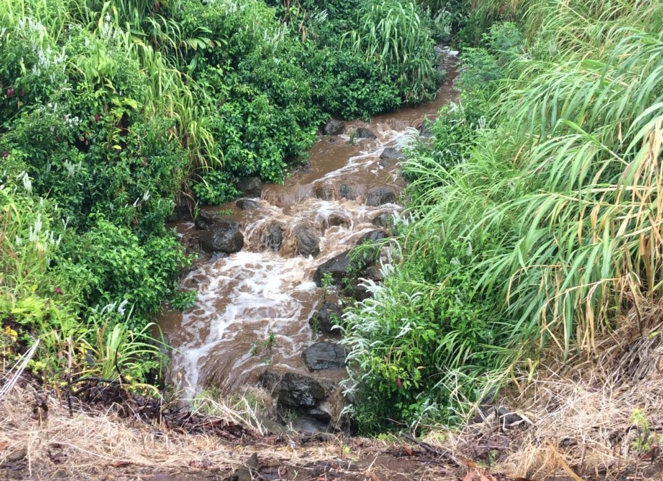 Big Island Dairy Sued Over Water Pollution Concerns