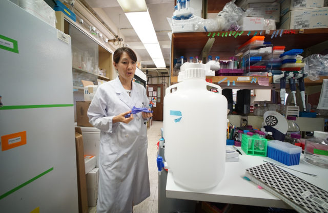 Researcher Kaho Tisthammer PhD in the UH Kewalo laboratory.