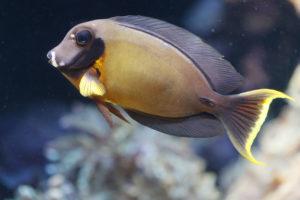 Hawaii Governor Vetoes Aquarium Fishing Bill, 12 Others