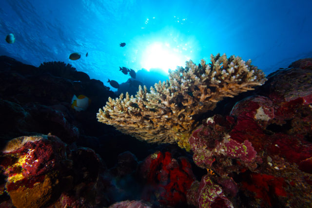 Underwater scene in National Marine Sanctuary of American Samoa. Image courtesy of Greg McFall