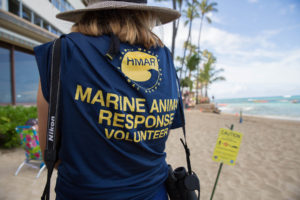The Monk Seal Show Now Playing In Waikiki Has A Crucial Supporting Cast