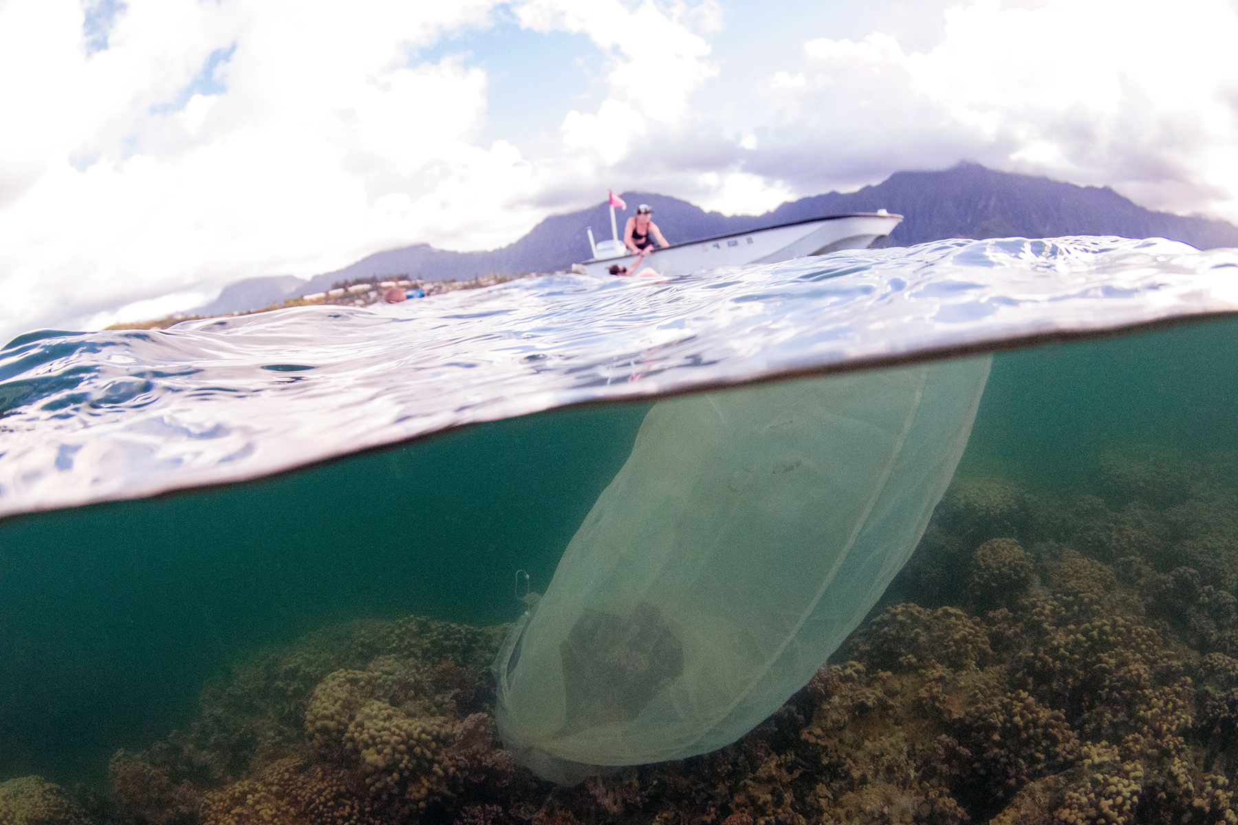 <p>Scientists have attached fine mesh nets to healthy coral heads in Kaneohe Bay to collect the spawn so they can breed super corals.</p>