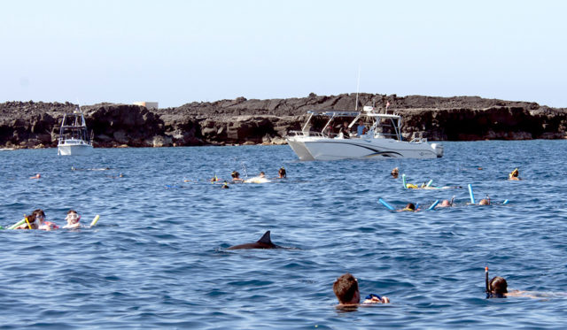 This undated photo provided by NOAA Fisheries shows Spinner dolphins in Hawaii surrounded by people seeking close interactions as multiple boats and dozens of people are sometimes in the water with dolphins at once. A judge in Hawaii has found a tour operator violated federal law by repeatedly dropping swimmers in front of dolphins and encircling the animals with his tour boat. National Oceanic and Atmospheric Administration officials have been developing rules to regulate interactions with dolphins out of concern swim-with-dolphin tours popular in Hawaii are disrupting the resting, socializing and reproductive behavior of the animals. (NOAA Fisheries via AP)