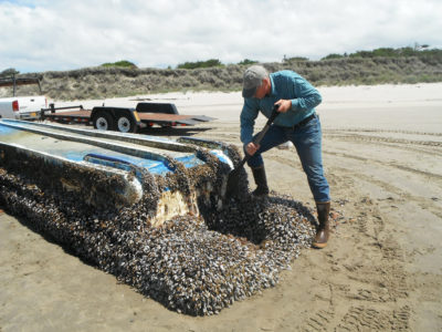 This undated photo provided by Russ Lewis shows researcher John Chapman inspecting a Japanese vessel which washed ashore on Long Beach, Wash. On Thursday, Sept. 27, 2017, researchers reported nearly 300 species of fish, mussels and other sea creatures hitchhiked across the Pacific Ocean on debris from the 2011 Japanese tsunami, washing ashore alive in the United States. (Russ Lewis via AP)