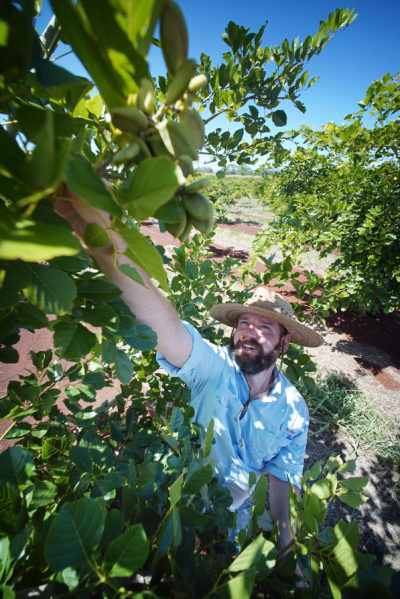 TerViva Manager Will Kusch shows us the Pongamia green seed pods that later cab processed into jet fuel and two kinds of diesel on their farm located in the Koolau above Haleiwa, North Shore, Oahu.