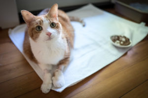 Ian Lind: Going The Distance With A Sick Pet