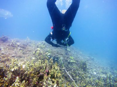 The State Of Coral In The Northwestern Hawaiian Islands