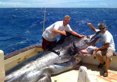 The Odd Story Of How A NOAA Scientist Calculated A Giant Marlin's Age