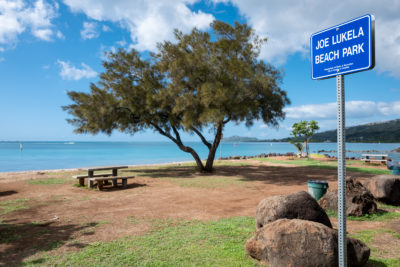 Ian Lind: Why A Tree In Hawaii Kai Is Raising Questions Of Favoritism