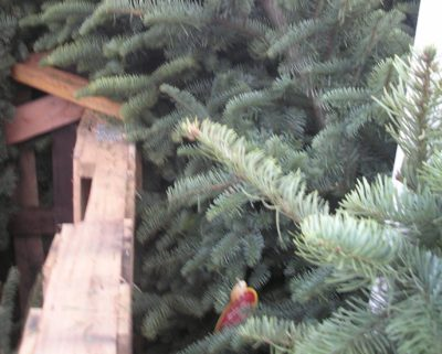 Alan McNarie: Creepy Christmas Guests Who Hitch A Ride On Your Tree