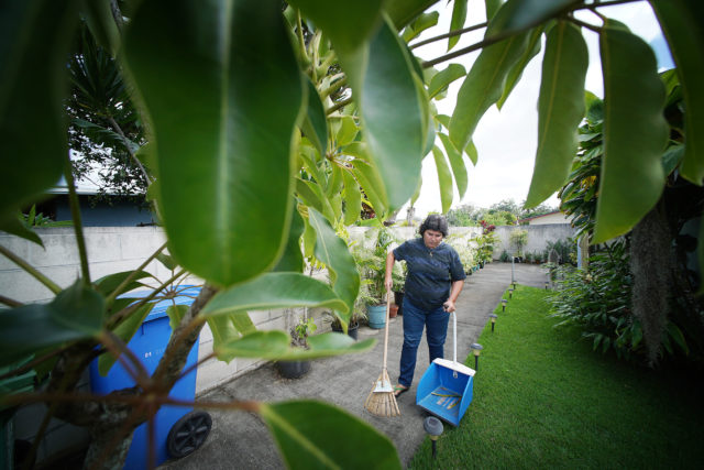 Vanessa Sylva raked up leaves outside her house in Wahiawa.