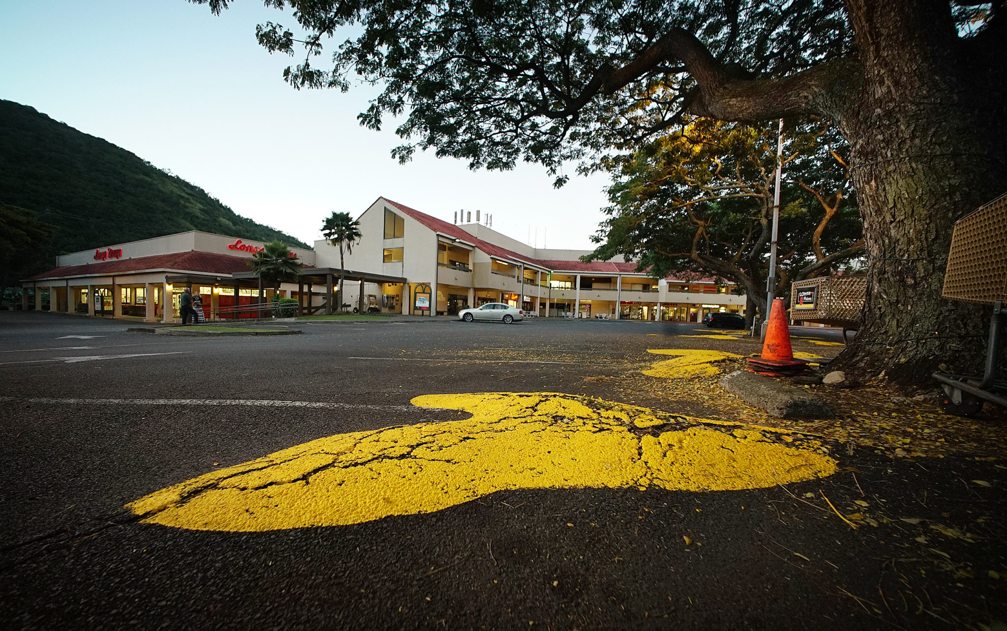 A&B new owners of Manoa Marketplace had the Monkeypod tree roots protuding the asphalt painted yellow.