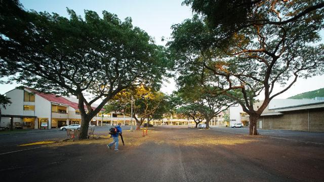 Manoa Marketplace Monkeypod Tree parking lot.