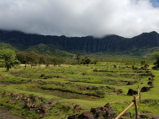 Lo'i terraces at Ka'ala Farm where students have been visiting for