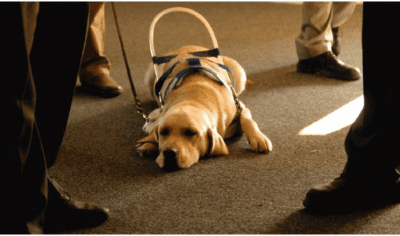 Bill Allows Fines For Those Who Falsely Claim To Have Service Animals