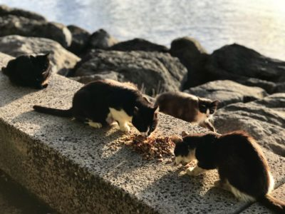 Feral Cat-Friendly Measure Dies In The Senate
