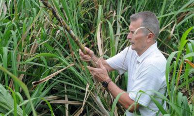 Kauai: Rum Distilleries Keep Hawaii's Sugar Industry Alive