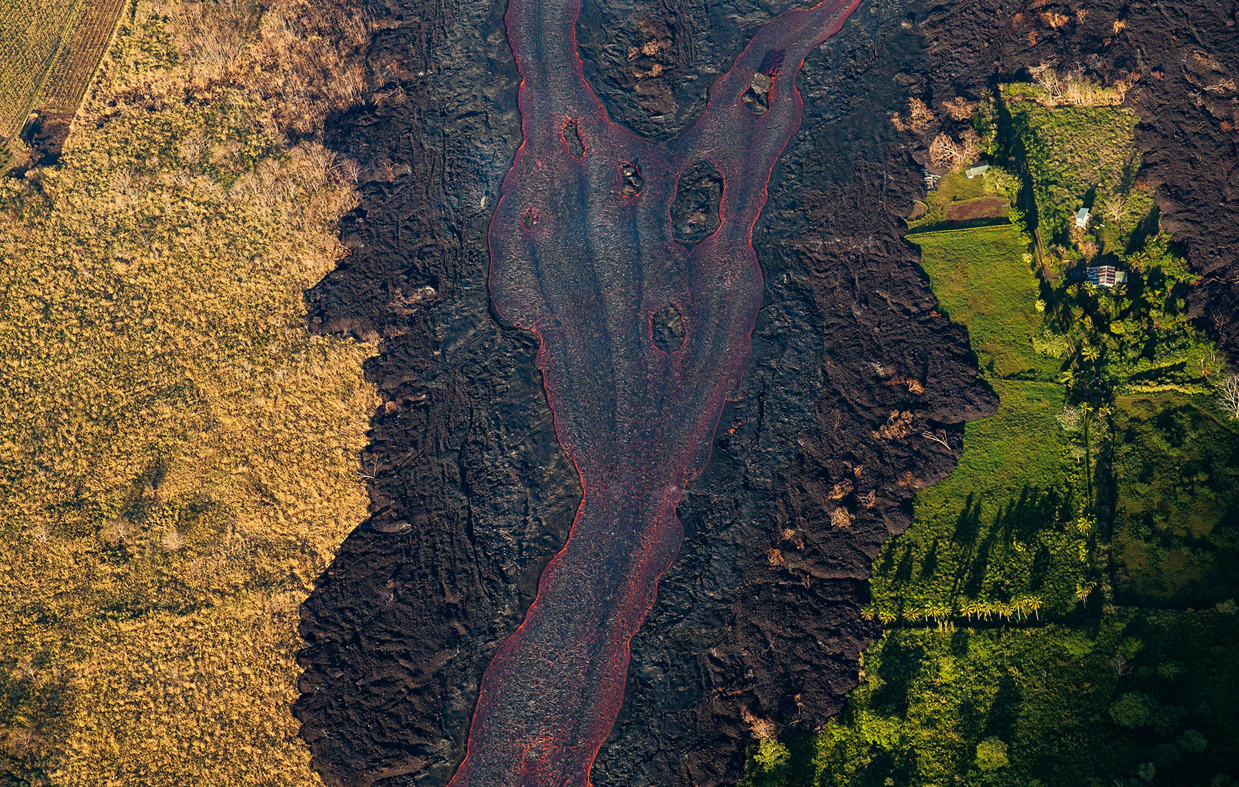 <p>Lava divides vegetation killed by sulfur dioxide emissions from still-lush areas.</p>